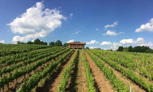 produits locaux, oenotourisme, canal de garonne, canal du midi, vin