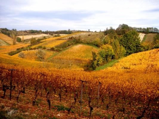 chasselas-paysage-coteaux-vigne-automne-canalfriends-pm