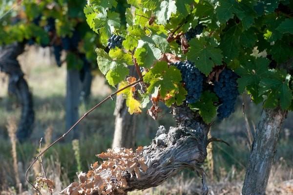 Maison-des-vins-tourisme-Fronton-Canalfriends-pm6