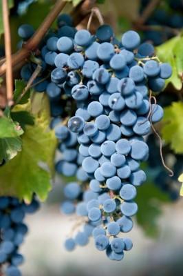 Maison-des-vins-tourisme-Fronton-Canalfriends-pm7