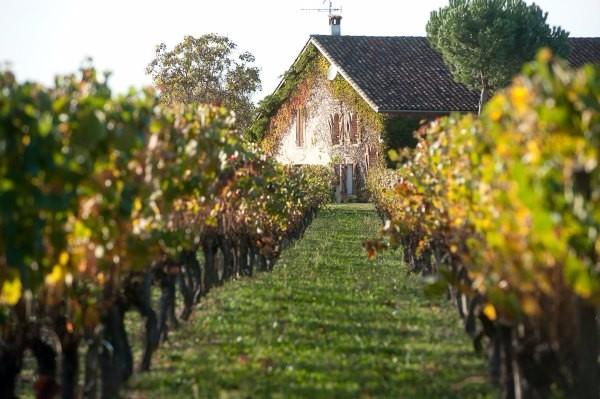 Maison-des-vins-tourisme-Fronton-Canalfriends-pm9