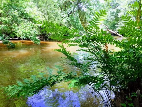 location de canoe, la leyre, landes, canalfriends, lou canoe