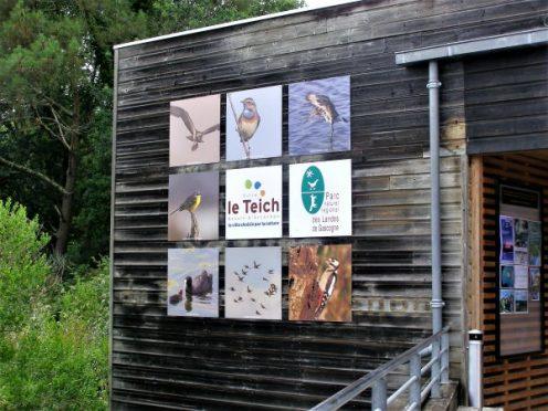 reserve ornithologique; le teich; la leyre; bassin arcachon; canalfriends