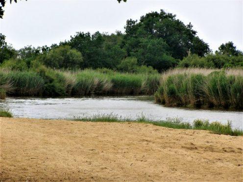 le Teich; reserve ornithologique; canalfriends; la leyre; location de canoe