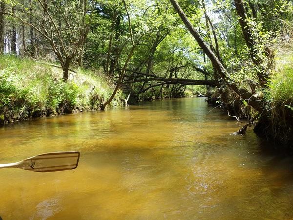 Fleau-canoe-canalfriends-7