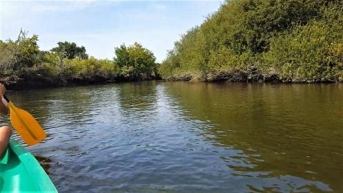 leyre; canoe; biganos; bassin arcachon